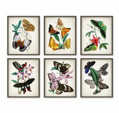 Antique Butterfly Art Print Set of 6 - Lepidopterist Gift Idea - Butterflies Decor - Butterfly Art - Butterfly Book Plate - AB447 by QuantumPrints on Etsy https://www.etsy.com/uk/listing/254014638/antique-butterfly-art-print-set-of-6