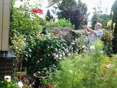 Zomer2015 tuin