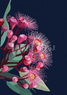 Flowering gum wall art by Australian artist Lamai Anne. Bring the Australian outdoors into your home. Australian Native Flowers, Australian Artists, Guache, Light Painting, Pictures To Paint, Botanical Art, Painting Techniques, Painting Tips, Painting Inspiration