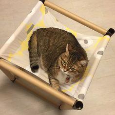 ネコは寝ることが大好き。そして心地よい場所も大好き。お部屋の中に猫用のハンモックをDIYしてあげると、ゆらゆら揺れながら楽しく遊んでくれますよ♪買うと高いペットグッズですが、なんと100均素材で手作りできます。愛猫のおもちゃを自作してあげて可愛い姿を見れれば、飼い主としてこんなにうれしいことはないですよね…!!まさにリアルねこあつめができる、自立式猫用ベッドの作り方をご紹介します♪
