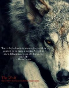 Aware wolf ☸️ STOP KILLING WOLVES !