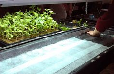 Hydroponics is a great alternative to soil gardening. The plants grow much fast and the yields are high. Like many others it is time for you to try it too.