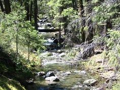 [East-Fork-New-York-Canyon-Creek.jpg]