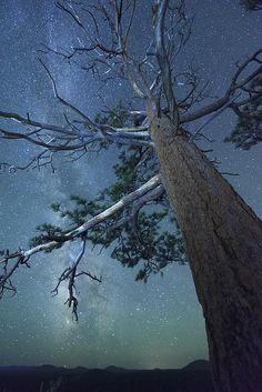 High Desert Night Sky - Horse Butte, Bend, Oregon