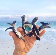 releasing baby turtles into their home. Cute Little Animals, Cute Funny Animals, Cute Baby Turtles, Turtle Love, Cute Creatures, Spirit Animal, Animals And Pets, Animal Pictures, Pictures Of Baby Dogs