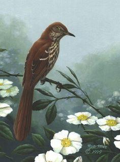 Georgia State flower: Cherokee Rose. State bird: Brown Thrasher.