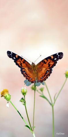 Animals Amazing, Butterfly Photos, Pet Puppy, Natural Phenomena, Beautiful Butterflies, Dream Garden, Natural World, Beautiful Creatures, Moth