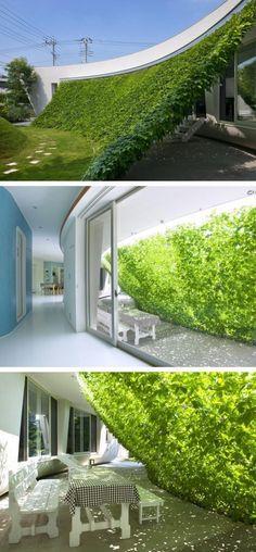 Voici le TOP 10 des meilleurs idées à réaliser avec des plantes grimpantes! - Décorations - Trucs et Bricolages