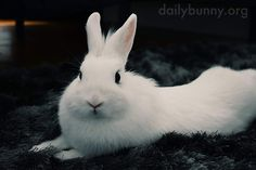 Bunny's eyes are deep, dark inky pools of cuteness - July 5, 2018