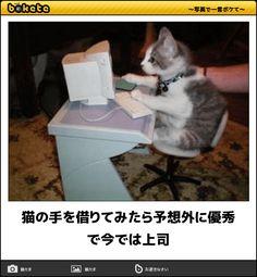 猫の手を借りてみたら予想外に優秀で今では上司