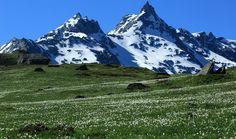 Fioriture in alta montagna #myValsusa 06.07.17 #fotodelgiorno di Mirella Giacone