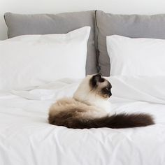Pablo the cat stars in our advertising and has great taste! Here he is perched on top of our Organic & Fairtrade Percale duvet cover!
