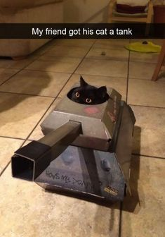 30 Funny Cat Pictures. Cat in a tank