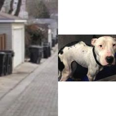 6/28 - ADOPT ME !!!!!!! Starved, deaf dog thrown away in alley trash can