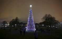 The U.S. Capitol Christmas Tree in Washington is 74 feet high and comes from Alaska's Chugach National Forest
