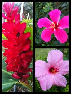 Hawaii Flowers -taken on the Big Island with my iPhone. :)