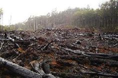 Clôture de l'année Internationale des forêts : les vrais chiffres de la déforestation
