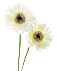 Brabourne Farm: Love .... White Flowers