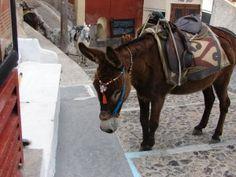 Stop Severe Donkey Mistreatment - ForceChange - PLEASE SIGN : http://forcechange.com/115525/stop-severe-donkey-mistreatment/