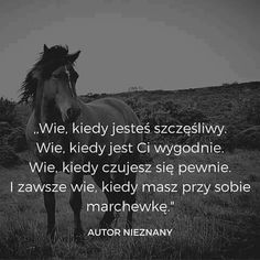 It's my horse🤔 Rider Quotes, Equestrian Quotes, Happy Photos, Horse Care, True Quotes, Motto, Animals And Pets, Inspirational Quotes, Lol