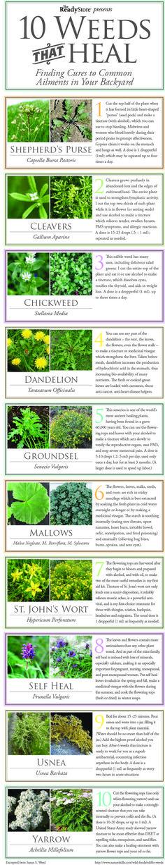 weeds that heal