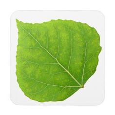 Green Aspen Leaf #11 Coaster - spring gifts style season unique special cyo