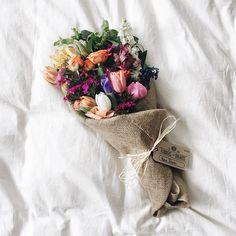 flowers.quenalbertini: Beautiful flowers | Ana Rosa