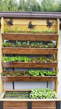 Great use of vertical space for gardening! Originally submitted via Facebook.