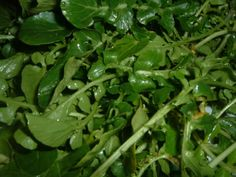 Wilted Watercress with Garlic - apparently watercress is like the #1 superfood and it's actually delicious!