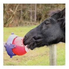 #caballo #juguetes #golosinas #likit.★ ★ Tienda de #hípica Tot d'Animals. Estamos en Av.Marina Baixa nº122 La Nucia (Alicante) nuestra web: www.theanimallshop.com telf:965870797