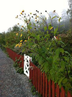 Rött staket, gula blommor (by ♥Helen♥)