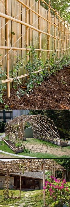 Bamboo for climbing plants