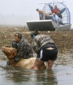 Heros!!   Sherry Henson, left, and Charmin Cosse try to save a cow along Highway 23 from Hurricane Isaac flooding in Louisiana's Plaquemines Parish on Aug. 30.