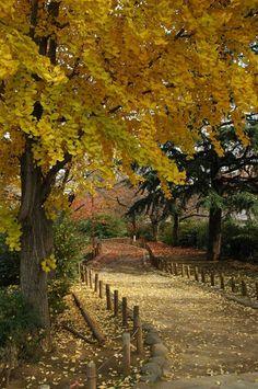 Autumn, Nerima, Japan Copyright: Gino Manalastas