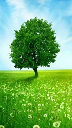 iphone wallpaper green tree - Google Search