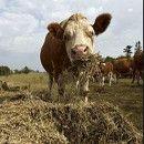 ¿Son tus hábitos alimentarios responsables y sostenibles? ecoagricultor.com