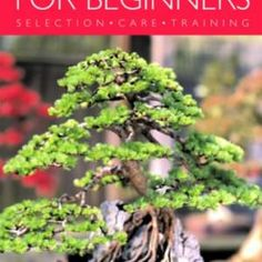 Indoor-Bonsai-for-Beginners-Selection-Care-Training-0