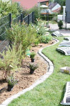 Hydrangea Seeds, Hydrangea Care, Hydrangea Flower, Hydrangeas, Little Gardens, Back Gardens, Different Plants, Types Of Plants, Trellis Panels