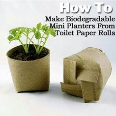 Toilet paper rolls as degradable plant starters!