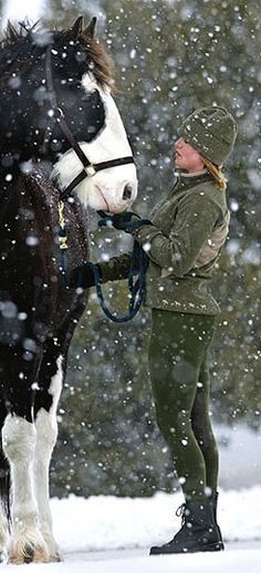 - A ride in the snow. Big Horses, Draft Horses, Camping Gifts, Winter Time, Winter Snow, Gentle Giant, Horse Art, Horseback Riding, Beautiful Creatures
