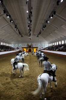 Real Escuela Jerez - A one of a kind experience Horse Spirit Animal, Andalusian Horse, Us National Parks, Cadiz, Spain And Portugal, White Horses, Spain Travel, Places Ive Been, To Go