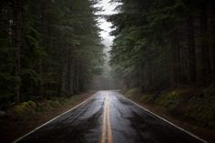 #forest #way #road