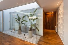 Indoor gardens: 8 ideas to take advantage of empty spaces in your home. They provide harmony and beautify any place! Indoor Courtyard, Internal Courtyard, Indoor Garden, Indoor Plants, Backyard Garden Landscape, Small Backyard Gardens, Interior Architecture, Interior Design, Interior Garden