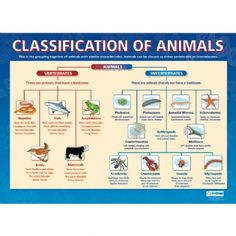 1000 images about science classification on pinterest animal classification classifying. Black Bedroom Furniture Sets. Home Design Ideas