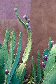 Purple cactus fruit. #coloreveryday