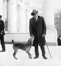 Bark Star    While nearly every president since Washington had animals of some kind, the first notable presidential pet was Warren G. Harding's Airedale terrier, Laddie Boy, who became a celebrity of sorts—and even had his own special chair in which he could sit during cabinet meetings.