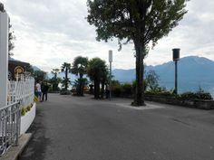 Montreux 01 Tree Branches, Art Pieces, Sidewalk, Street View, Switzerland, Artworks, Side Walkway, Art Work, Walkway