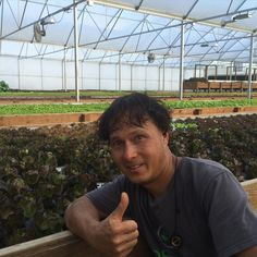 Having fun visiting and filming and episode at a commercial aquaponics farm in Houston Texas.  They focus on growing lettuce for the local market.  Subscribe to growingyourgreens on YouTube to be notified when the episode is out. #aquaponics #aquaponic #aquaponicfarm #lettucefarm #sustainableharvesters #growingyourgreens