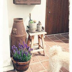 玄関タイル/O型です♪/犬部♪/ワンコのオケツ/ラベンダー/サビサビのミルク缶…などのインテリア実例 - 2015-05-23 14:40:51 | RoomClip(ルームクリップ)