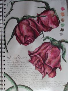 Wilting Roses by x-Kanon-Ai-x on DeviantArt Wilted Rose, Wilted Flowers, Rose Sketch, Flower Sketches, Rose Zeichnung Tattoo, Rose Drawing Tattoo, Rose Stencil, Observational Drawing, Art Diary
